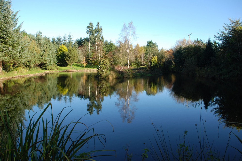 Autumn 2013 Pond